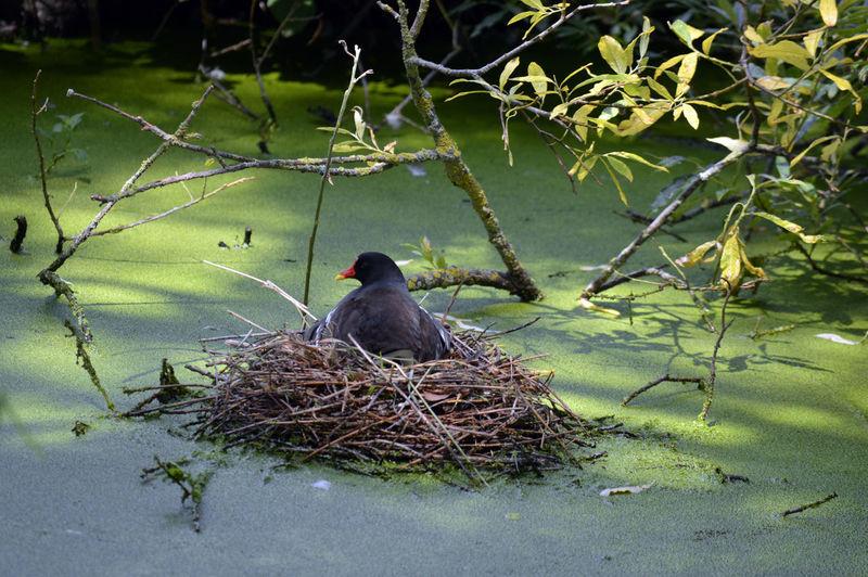 Bird perching on nest in lake