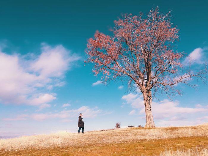 Man walking on field by bare tree against blue sky