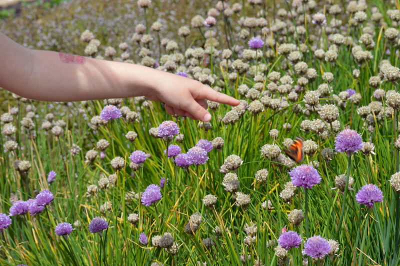 Low angle view of purple flowering plants on field