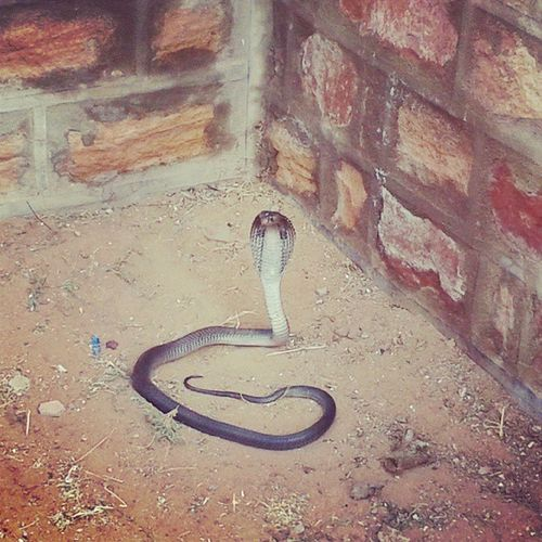 Black Sanke @VinodGoyal47's home. It's very Dangerous .