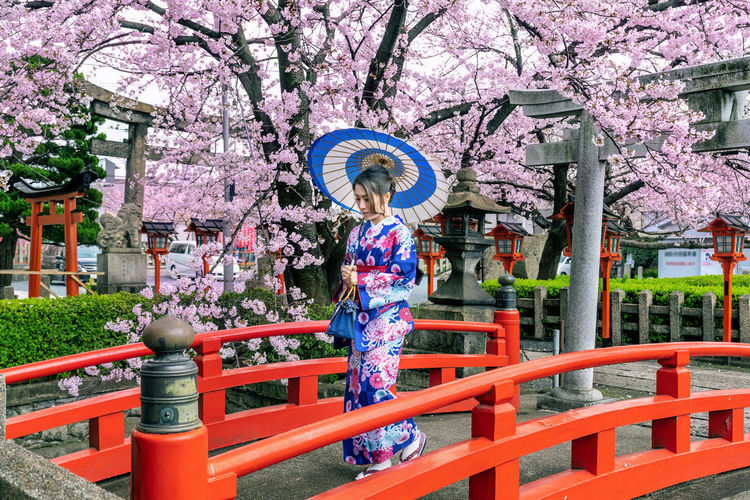 Asian woman wearing japanese traditional kimono and cherry blossom in spring, Kyoto temple in Japan. Plant Flower Tree One Person Flowering Plant Fragility Growth Women Day Springtime Blossom Nature Real People Protection Clothing Freshness Architecture Standing Lifestyles Cherry Blossom Outdoors Cherry Tree