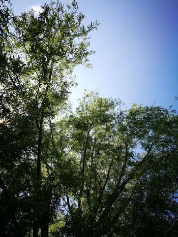 """""""One to a quarter of blue sky"""" Tree Low Angle View Nature Beauty In Nature Sky No People Branch Green Color Growth Day Outdoors Freshness"""
