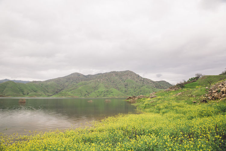 Beauty In Nature Cloudy Day Flood Flooded Flowers Lake Lake Kaweah Landscape Mountain Mountain Range Nature No People Outdoors Plant Scenics Sky Tranquil Scene Tranquility Tree Water California Dreamin