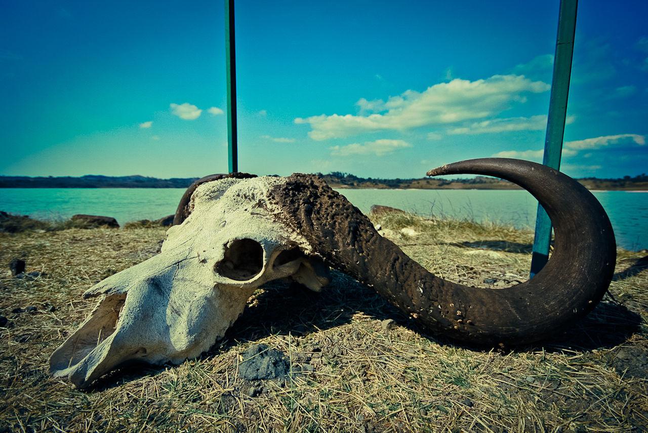sky, bone, nature, cloud - sky, animal skull, land, no people, day, horned, animal body part, animal bone, field, metal, animal skeleton, sunlight, outdoors, animal, close-up