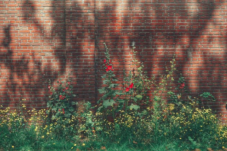 2019 Niklas Storm Juli Flower Backgrounds Multi Colored Full Frame Brick Wall Ivy Close-up Plant Architecture Growing Blooming Flower Head Poppy In Bloom Fragility The Architect - 2019 EyeEm Awards My Best Photo