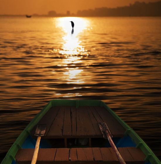 alone EyeEm Selects Bird Water Swimming Sunset Nautical Vessel Lake Full Length Reflection Wood - Material Floating On Water Kayak Calm Paddling Rowing Rafting Rowboat Shore Horizon Over Water