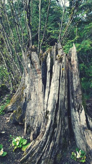 Dead Tree Stump Growth Close-up Nature Outdoors