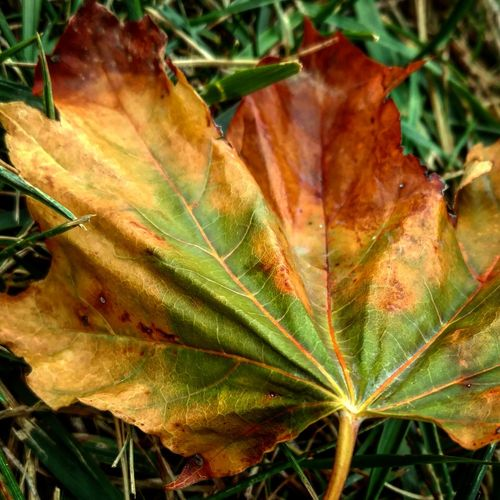 Leaf Natural Pattern Close-up Leaf Vein Autumn Dry Nature Plant Tranquility Leaves Outdoors Beauty In Nature