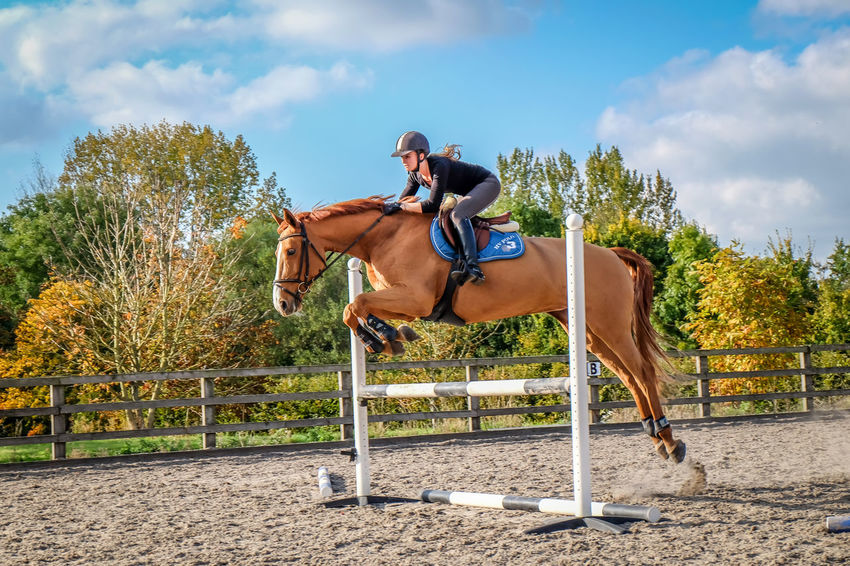 Autumn Autumn Leaves Brown Horse Horse Jumping Jockey Jumping Motion Outdoors Riding Sand Sport Stables Trees Women