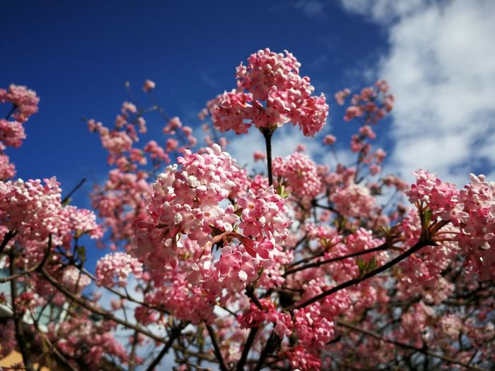 Flower Head Flower Tree Branch Springtime Pink Color Blossom Sky Close-up Cherry Tree Plant Life Almond Tree Cherry Blossom Apple Blossom Orchard Apple Tree Plum Blossom Botany Blooming Stamen Pollen Twig Fruit Tree Pistil In Bloom Apple