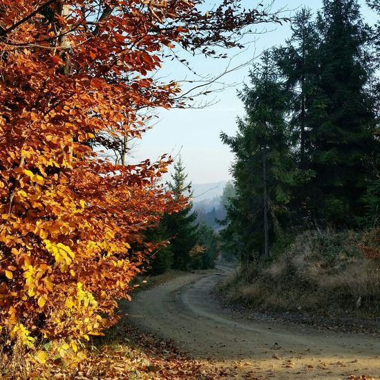 Beskid Beskidy Beskidslaski Poland Lubiepolske Trees Drzewa Droga