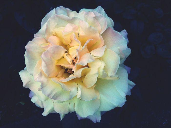 Beautiful 💕👌 holiday 😘🙈 Beautiful Flower Selfmade
