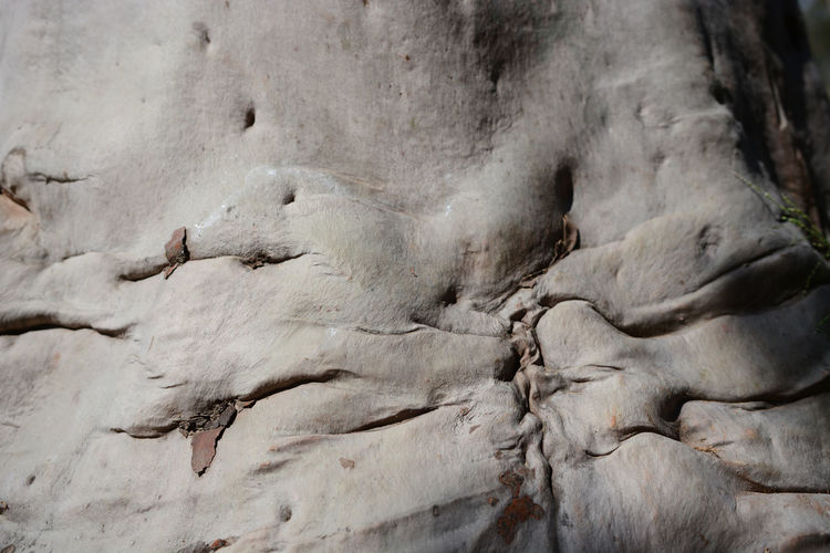 Abstract Human Body Tree Skin Tree Trunk Daily Beauty Daily Abstract Shapes Of Gray Gray Creativity Outdoors Nature Textured  Close-up No People Full Frame Backgrounds California Use Your Imagination