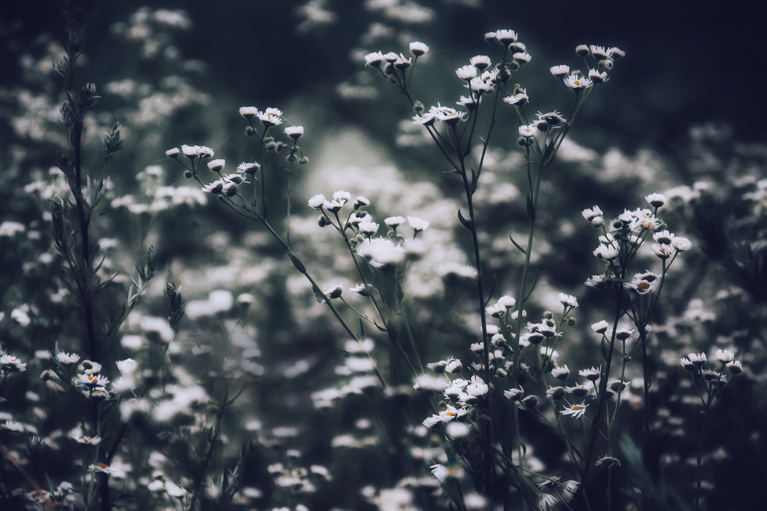 flower, growth, freshness, fragility, plant, beauty in nature, nature, focus on foreground, blooming, petal, stem, field, selective focus, close-up, wildflower, in bloom, flower head, outdoors, blossom, day