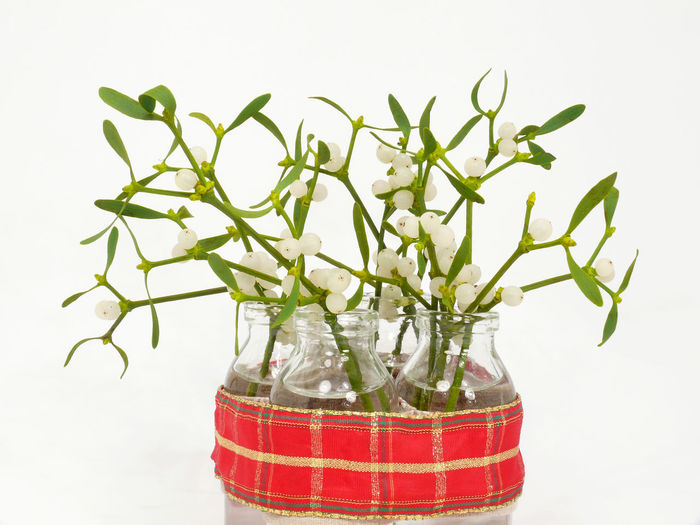 Beauty In Nature Branch Day Flower Freshness Growth Indoors  Leaf Misleading Mistel Misteln Schneiden Mistelzweig Mistletoe Mistletoe Ball Mistletoes Nature No People Plant Radiator White Background
