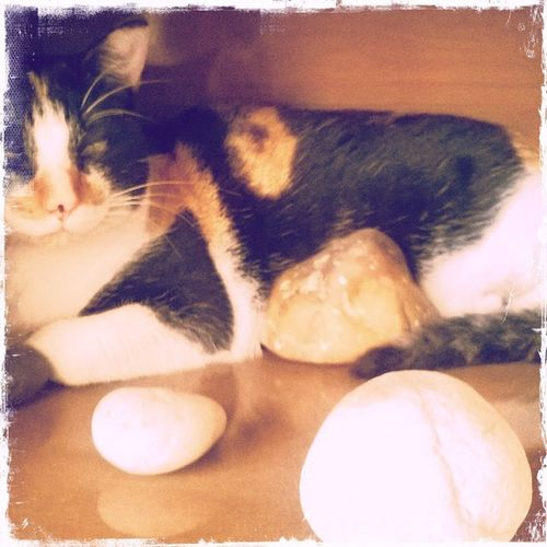 <3 Cats Littlerock 's Mondays Weakness Hipstamatic Oggl Lucasab2 Kodotxgrizzled