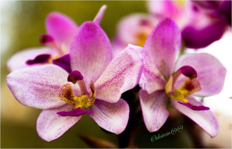 Flowerporn Macroclique Macro Nature EyeEm Best Shots - Nature