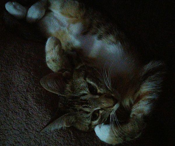 My baby NOLA! Close-up No People Animal Themes Pets Pets_collection Pets And Animals Pets At Home Petsarefamily Catsofeyem Catseyes