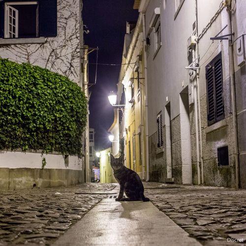 Portugal souvenir d'une nuit à Cascais coucou le Chat