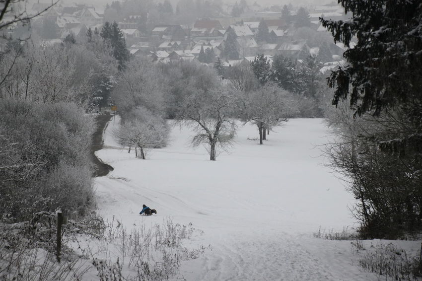 sledging Sledging Winter Sport Animal Themes Beauty In Nature Cold Temperature Day Dog Growth Little Village In Winter Mammal Nature One Child One Child In Winter One Person Outdoors Pets Playing In Winter Scenics Snow Swabian Alb Swabian Alb In Winter Tranquility Tree Winter Shades Of Winter