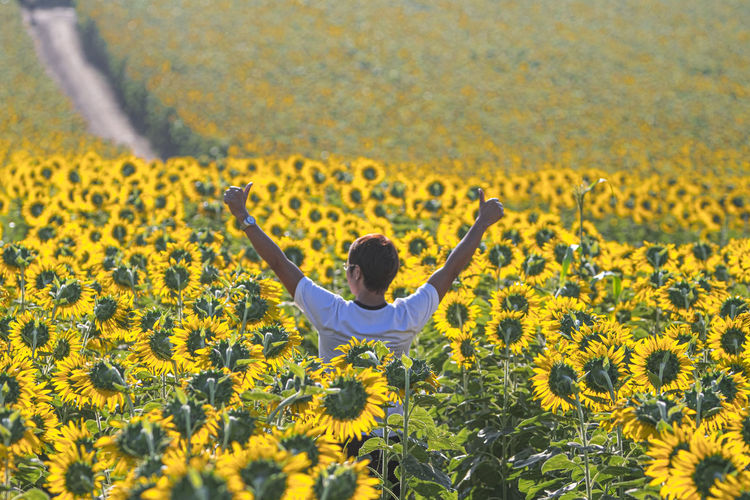 Rear view of person on sunflower field