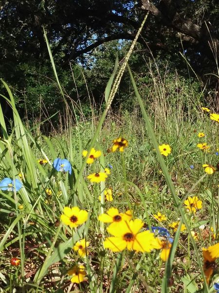 Wild Flowers Field Of Flowers Yellow Flowers Color Yellow Sunny Day Outside Nature_collection