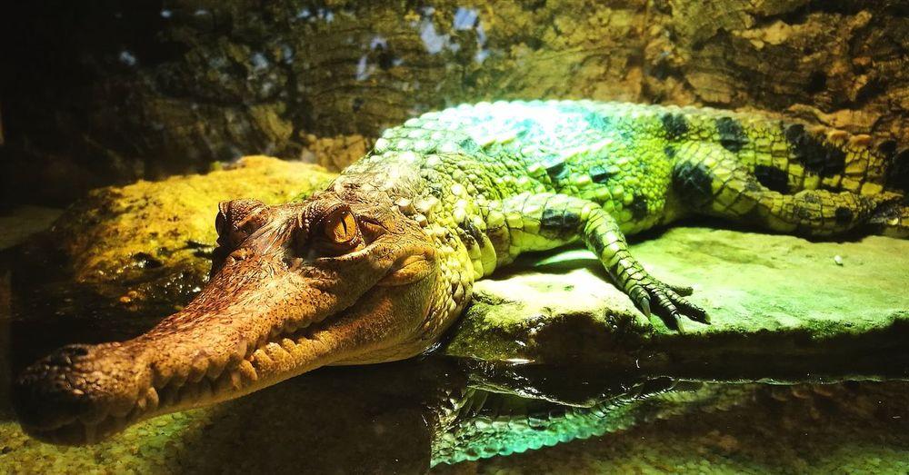 Reptile Water