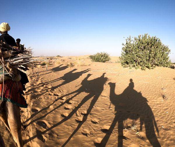 Desert India Sheepherd Travel Camel Desert Jaisalmer Nature Obrigado Outdoors Rajasthan Sand Sand Dune Shadow Sheep Sunset Thar Desert
