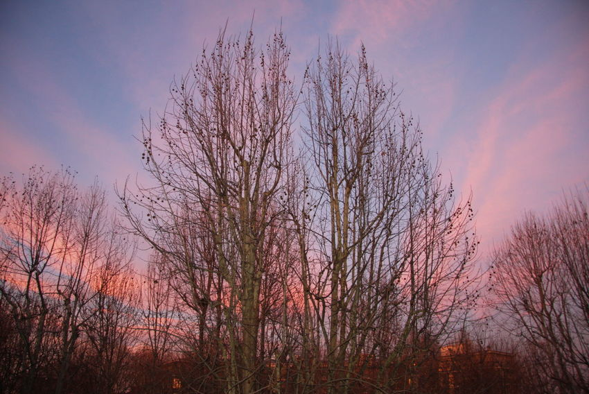 Cloud - Sky Landscape Nature Outdoors Pink Clouds Pink Sky Scenics Sky Sunset Tranquil Scene Tranquility Tree