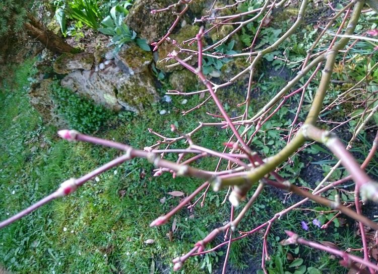 Exploring New Ground Leave Leaves Spring Springtime Pringtemps Feuilles Bourgeons
