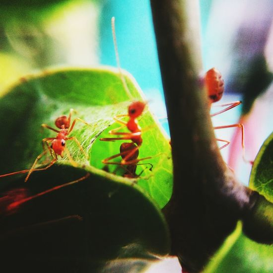 Insect Animals In The Wild Animal Themes Green Color Nature Animal Wildlife Day Close-up No People One Animal Outdoors Beauty In Nature Huaweiphotography Micro Lens