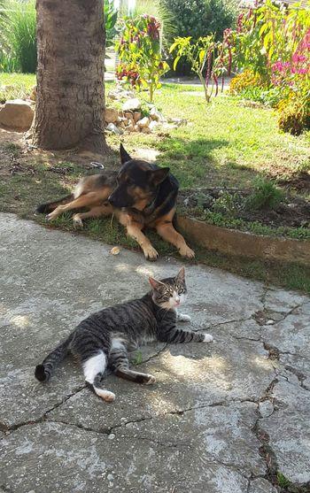 Cat Dog Frendly