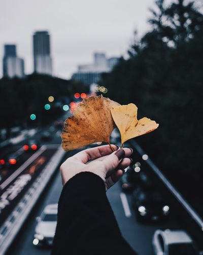 Close-up of person holding autumn leaf in city