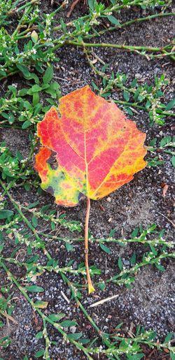 🍂 Herbst