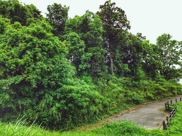EyeEm Selects EyeEm Gallery Tree Water Sky Grass Green Color Plant