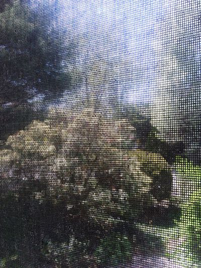 Garden Moskito Net