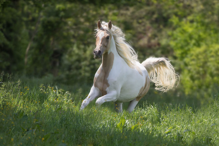 Green Color Animal Themes Equine Greenbackground Horse Horse Photography  Painthorse White Color