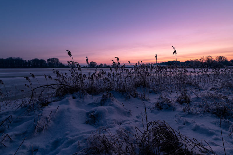 Snow covered plants against sky during sunset