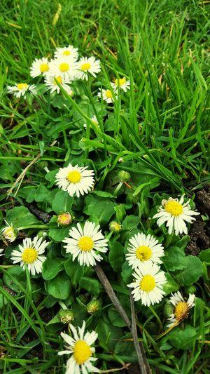 Blumen Zeichen Für Das Leben Relaxing First Eyeem Photo