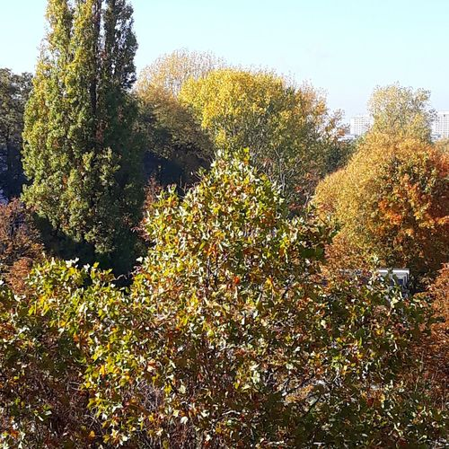 Autumn colours Autumn Autumn colors Trees No People Sunshine Tree Sky Close-up Plant Leaves