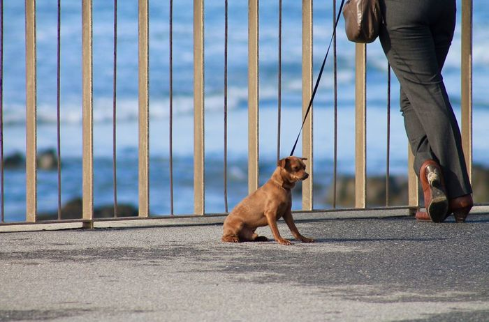 Hanging Out Taking Photos Enjoying Life Check This Out Relaxing Selective Focus Walking Around Tranquil Scene Outdoors Outdoor Photography My Point Of View Taking Photos Dog Lines Dog Lover Sunny Day Ocean View Waves Things I Like