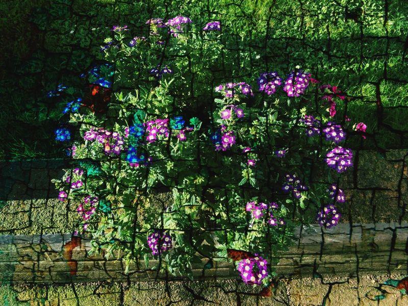 Blume im Garten - Abstrakt 1 First Eyeem Photo Blume Garten Natur Abstrakt Rasen Topfpflanze Steingarten