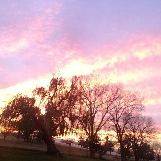 Sky was gorgeous last nite! SkyPics Norcal Oakcreek @virgogirl911