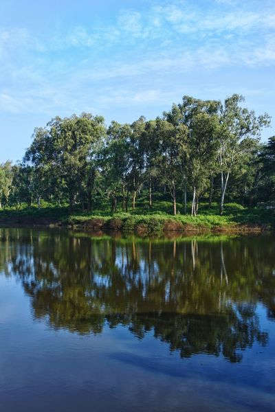 Reflection Reflection Of Trees In Water Nature Photography No People Lake Tree Outdoors Water Reflection Beauty In Nature Sky India Outings  Landscape Symmetry
