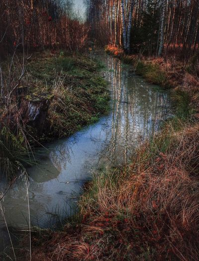 Water Day Outdoors No People Reflection Nature Tree Fine Art Photography November Marraskuu Forestwalk Suomi Finland Tranquil Scene Beauty In Nature Nature Reflection Multi Colored Backgrounds Stream