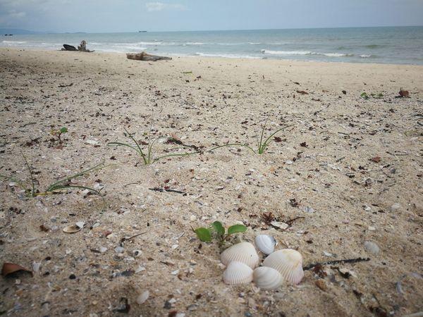 Thailand Beach Sand Baancivilize Resort Khanom Sky Shell