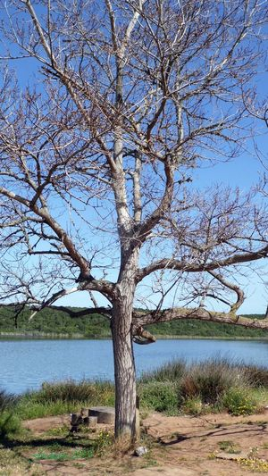 Automne Bare Tree Beauty In Nature Branch Ciel Bleu Ciel Clair Clear Sky Day Lac Lake Landscape Lone Nature No People Outdoors Ruisseau Sans Nuage Scenics Sky Tranquil Scene Tranquility Tree Tree Trunk Water
