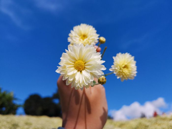 Cropped Hand Holding Flowers Against Sky