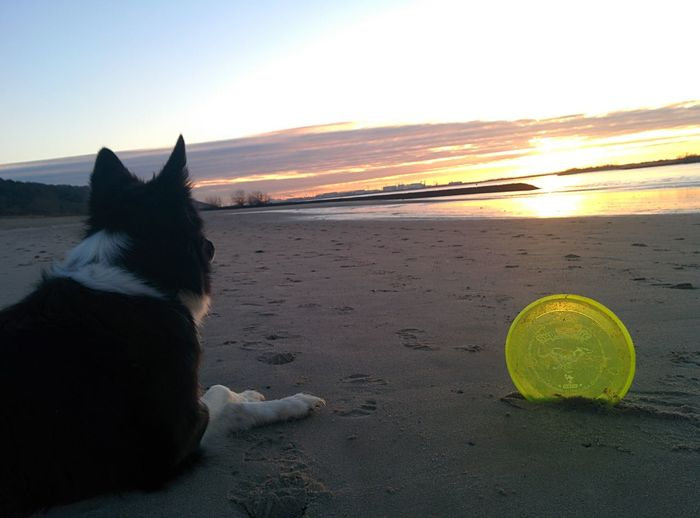 Enjoy the Morning with My Dog Border Collie