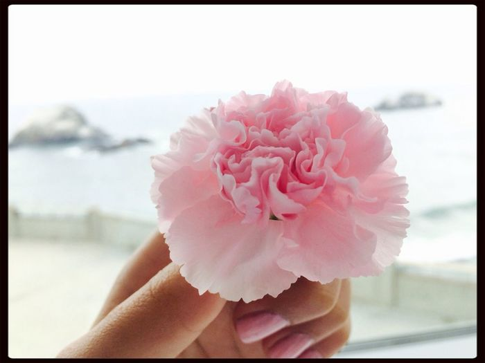 this flower is photogenic maybe it could lend me some of that Flower Pinkisthenewblack Pink Flower